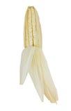 Milho isolado no fundo branco Imagem de Stock