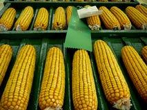Milho justo do estado de Iowa Fotos de Stock Royalty Free