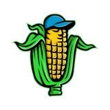 Milho na espiga com a mascote do chapéu de basebol Imagens de Stock