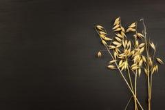 Milho no fundo de madeira escuro O conceito da agricultura e da padaria Imagem de Stock