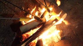 Milho novo das fritadas dos amigos em uma vara de madeira no fogo do acampamento vídeos de arquivo