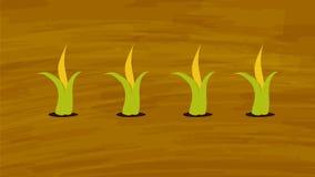 Milho que cresce no vetor do campo de cultivo Agricultura e cultivo Agrotourism ilustração stock