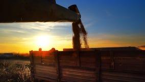 milho que está sendo transferido a um caminhão Fotos de Stock Royalty Free