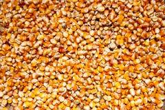 Milho seco Fotos de Stock