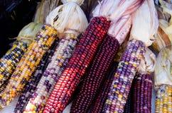 Milho selvagem colorido Imagens de Stock