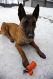 Milicyjnego psa szkolenie obrazy stock