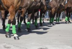 Milicyjni konie z zielonymi leggings, St Patrick dnia parada, 2014, Południowy Boston, Massachusetts, usa Zdjęcia Stock