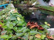 Milieu aquatique photo libre de droits