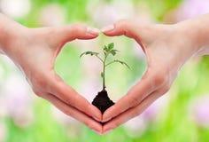 Milieubewustzijn en beschermingsconcept royalty-vrije stock foto