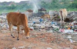 Milieudegradatie stock foto