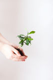Milieuvriendelijk Stock Foto