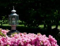Milieuvriendelijke Straatlantaarn in Roze Struik royalty-vrije stock foto