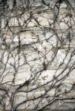 Milieux décoratifs texturisés abstraits Photos libres de droits
