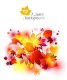 Milieux d'automne Image stock