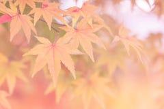 Milieux d'automne [foyer mou] Image stock