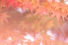 Milieux d'automne [foyer mou] Image libre de droits