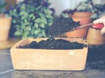 Milieux de culture dans la vieille casserole de graine faite en brique photo libre de droits