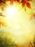 Milieux de feuilles d'automne Photographie stock