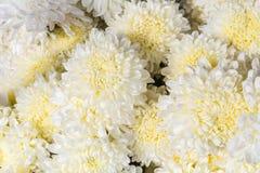 Milieux de fleur blanche Photos libres de droits
