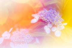 Milieux de fleur dans coloré chaud Photos stock