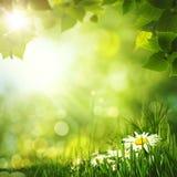 Milieux de forêt d'été de beauté Image stock