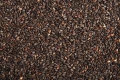 Milieux de graines de sésame Image libre de droits