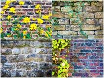 Milieux de mur en pierre avec des feuilles de lierre Images stock