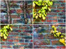 Milieux de mur en pierre avec des feuilles de lierre Photo libre de droits