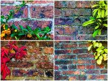 Milieux de mur en pierre avec des feuilles de lierre Photographie stock libre de droits