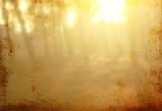 Milieux de nature de lumière d'été parmi des arbres Image texturisée filtré Image stock