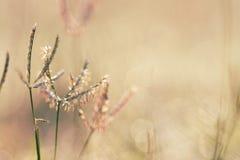 Milieux de nature, rosée de matin de ressort sur l'herbe photos stock