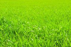 Milieux de pelouse Photographie stock