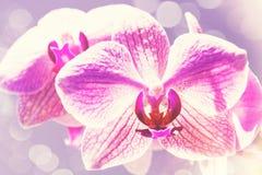 Milieux de ressort de beauté avec l'orchidée rose Image stock