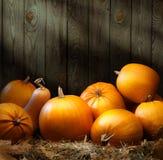 Milieux de thanksgiving de potiron d'automne d'art Photographie stock libre de droits