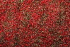 Milieux de tissu tricoté laineux. Photographie stock