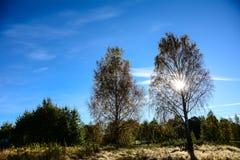 Milieux des arbres Photo libre de droits