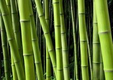 Milieux en bambou verts de nature Photos libres de droits