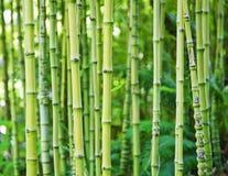 Milieux en bambou verts de nature Images libres de droits