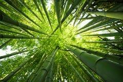 Milieux en bambou verts de nature Photo libre de droits
