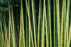 Milieux en bambou verts de nature Photos stock