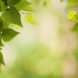 Milieux environnementaux abstraits Photos stock