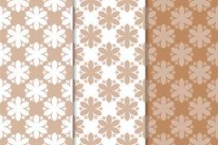 Milieux floraux de Brown Ensemble de configurations sans joint Photographie stock libre de droits