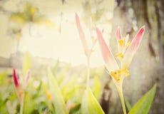 Milieux floraux texturisés d'un jardin au Mexique Photos stock