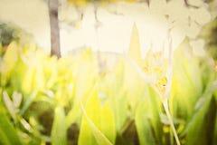 Milieux floraux texturisés d'un jardin au Mexique Photographie stock