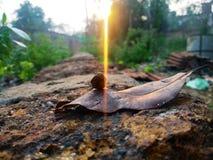 Milieux : lumière du soleil images libres de droits