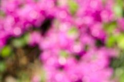 Milieux roses d'abrégé sur bokeh Images libres de droits