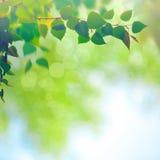 Milieux saisonniers abstraits Photo stock