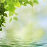 Milieux saisonniers abstraits avec des arbres de hêtre Image stock