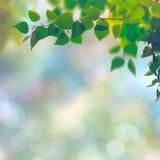 Milieux saisonniers abstraits avec des arbres de hêtre Image libre de droits