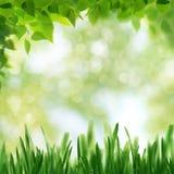 Milieux saisonniers abstraits avec des arbres de hêtre Photo stock
